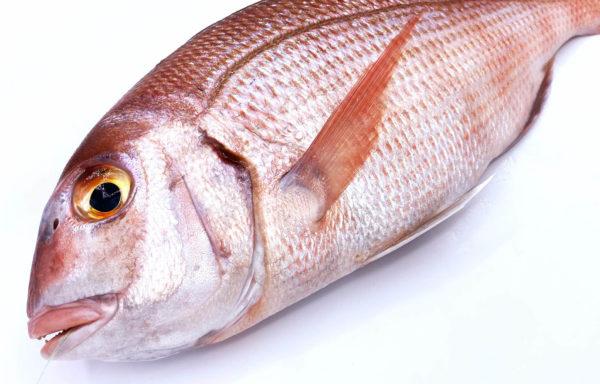 Compra a domicilio bocinegro de Cádiz, un pescado fresco de Conil pescado artesanalmente en las costas de Cádiz