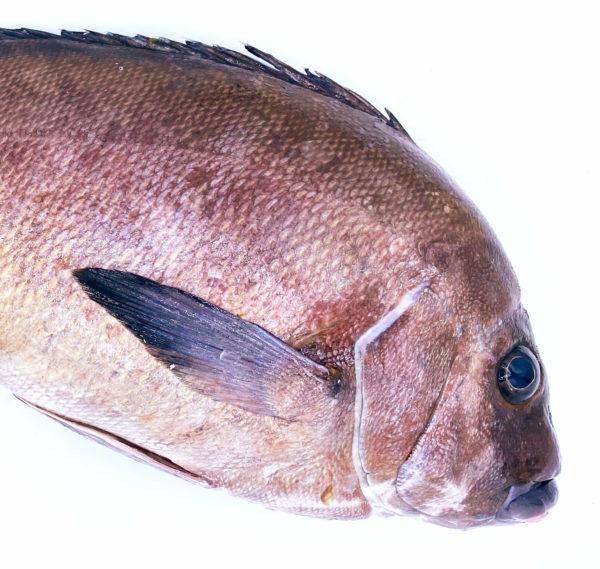 Compra Borriquete a domicilio, tiene una boca y un color característicos y viene directo desde la lonja de Conil.