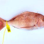 Compra Pargo a domicilio, pescado de roca de Conil fresco en casa