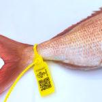 Esta brida amarilla te demuestra que el pescado salió de la lonja de Conil, que marca así a sus pescados mayores de 800 gr