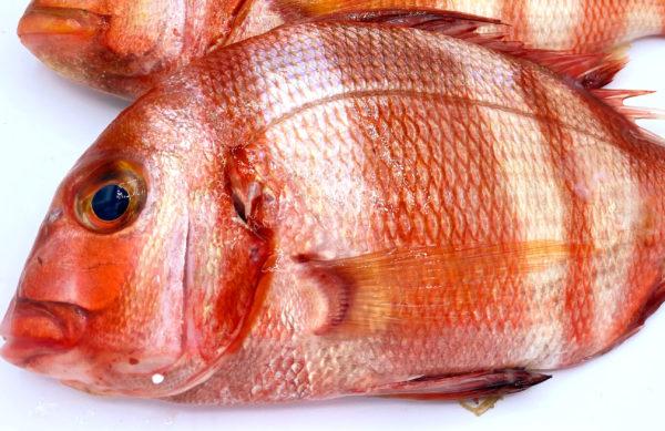 Urta a la roteña es una de las recetas más famosas de este pescado