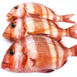 Compra urta, pescado de roca salvaje online