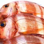 Compra urta, pescado de roca salvaje, y recíbela fresca sin moverte de casa.