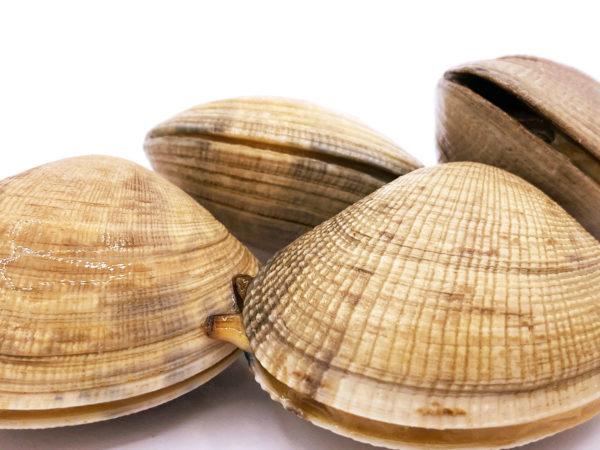 Almeja gallega de carril japónica
