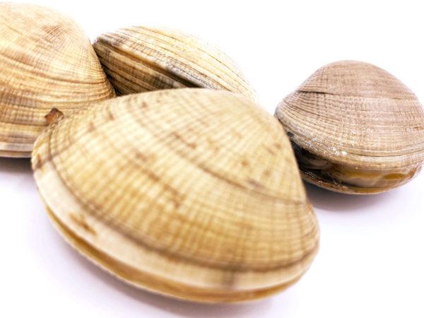 Almejas japónicas gallegas