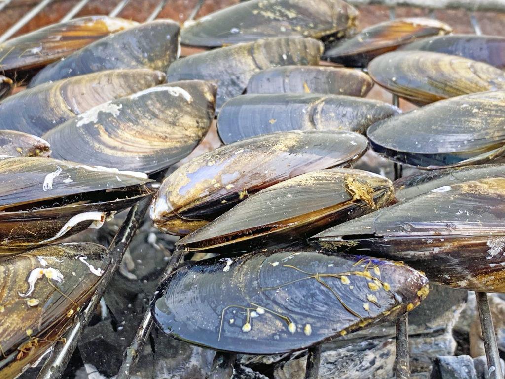 Compra mejillones gallegos en mariscoencasa.com, directos desde Pontevedra hasta tu hogar