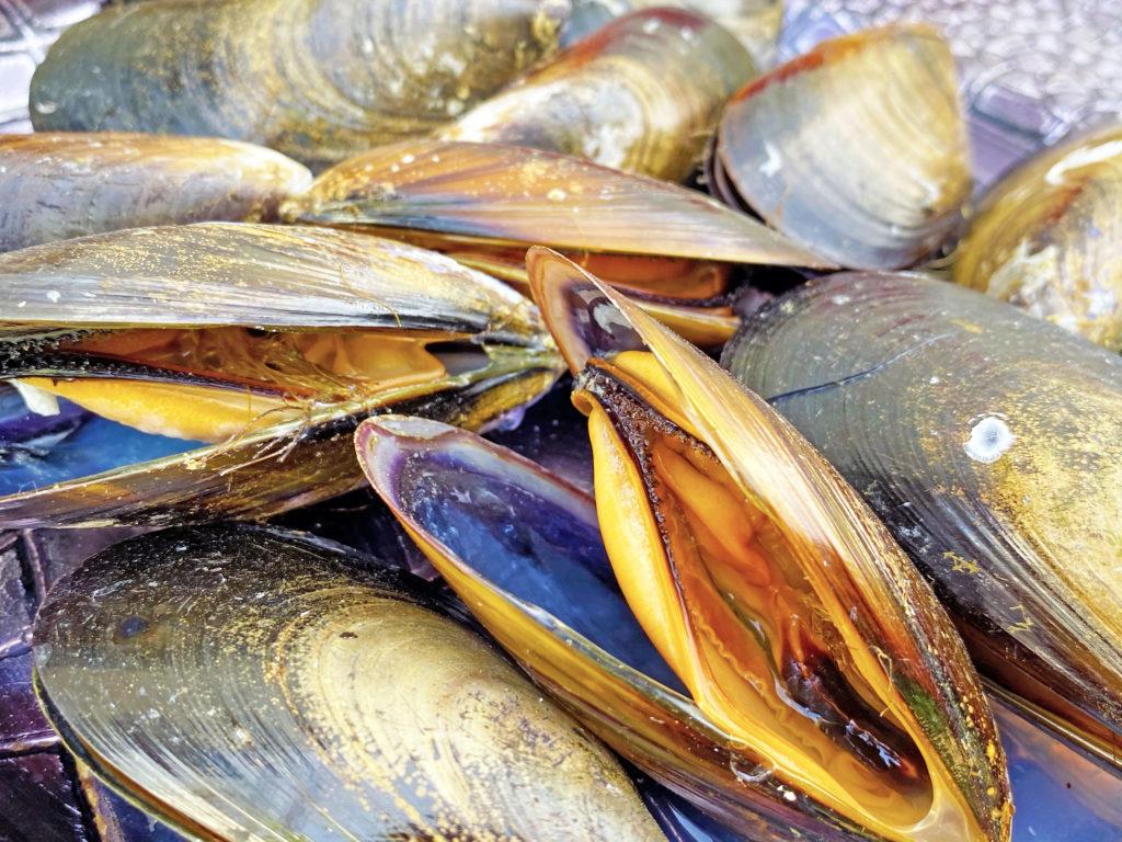 Los mejillones de mariscoencasa.com son carnosos, jugosos, generosos de carne y de una calidad extraordinaria. ¡Prometemos no defraudarte!